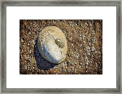 Sea Shell By The Seashore Framed Print by Kelley King