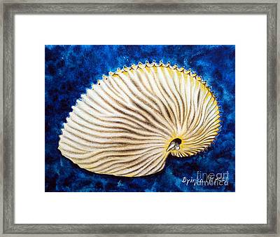 Sea Shell Original Oil On Canvas No.2. Framed Print by Drinka Mercep