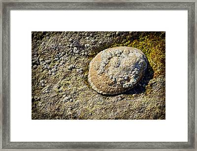 Sea Shell Rock Framed Print by Kelley King
