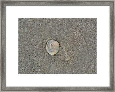 Sea Shell Sally Framed Print by JAMART Photography