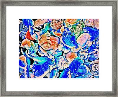 Sea Shells 3404 1e 6 Framed Print