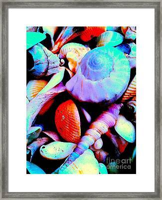 Sea Shells 5836 3 Framed Print