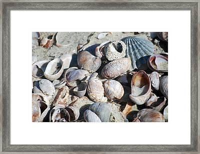 Sea Shells Framed Print by Alan Holbrook