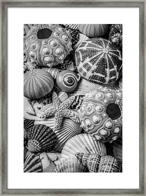 Sea Shells In Black And White Framed Print by Garry Gay