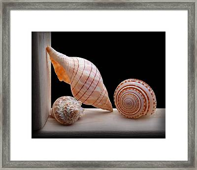 Framed Print featuring the photograph Sea Shells by Krasimir Tolev