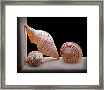 Sea Shells Framed Print by Krasimir Tolev