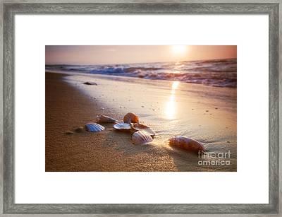 Sea Shells On Sand Framed Print