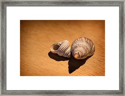 Sea Shells_3 Framed Print by Joe Hudspeth