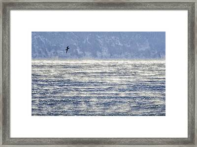 Sea Smoke And Gull Blues Framed Print by Marty Saccone