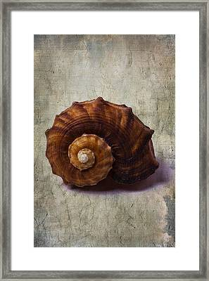 Sea Snail Framed Print