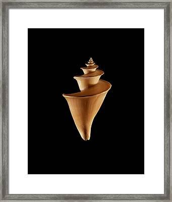 Sea Snail Shell Framed Print by Gilles Mermet