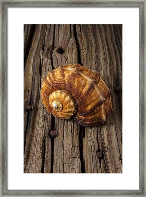 Sea Snail Shell On Old Wood Framed Print