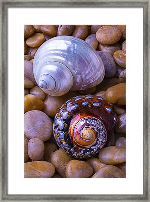 Sea Snail Shells Framed Print by Garry Gay