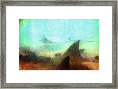 Sea Spirits - Manta Ray Art By Sharon Cummings Framed Print
