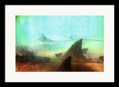 Devil Rays Framed Prints