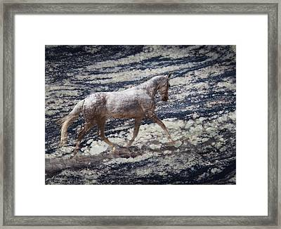 Sea Stallion Framed Print