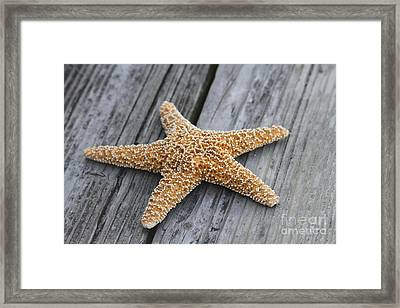 Sea Star On Deck Framed Print by Cathy Lindsey
