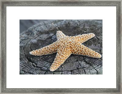 Sea Star On Post Framed Print