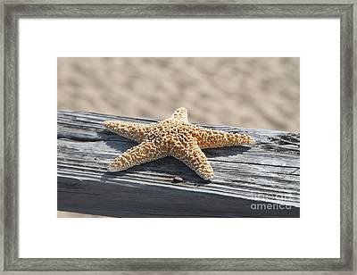 Sea Star On Railing Framed Print by Cathy Lindsey