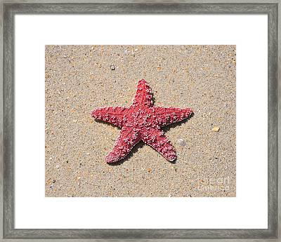 Sea Star - Red Framed Print by Al Powell Photography USA