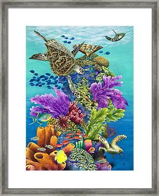 Sea Summit Framed Print by Carolyn Steele