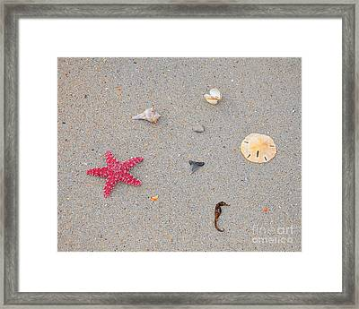 Sea Swag - Red Framed Print