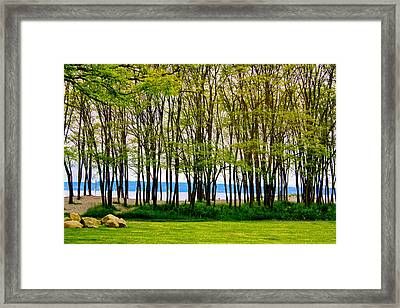 Sea Through The Trees Framed Print