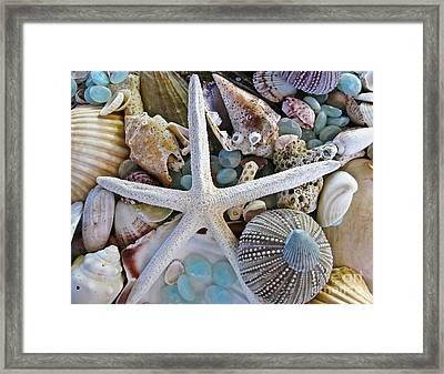 Sea Treasure Framed Print by Colleen Kammerer