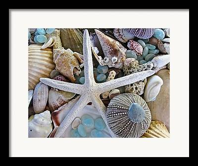 Seashore Framed Prints