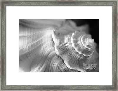 Sea Treasure Framed Print by Kelly Nowak