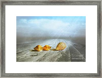 Sea Treasures Framed Print by Veikko Suikkanen
