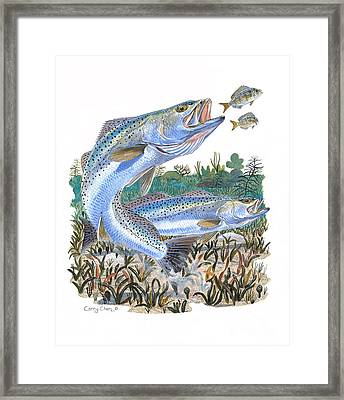 Sea Trout Framed Print by Carey Chen