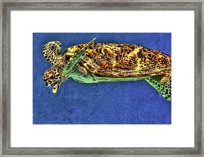Sea Turtel Framed Print by Karen Walzer