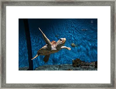 Sea Turtle 5d25085 Framed Print