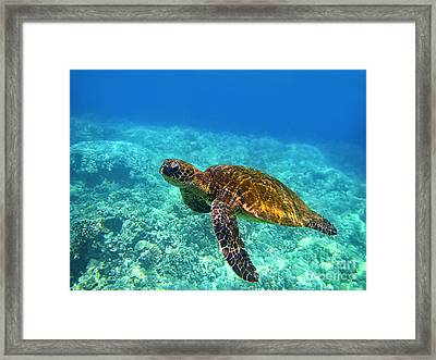Sea Turtle Close Up Framed Print by Bette Phelan