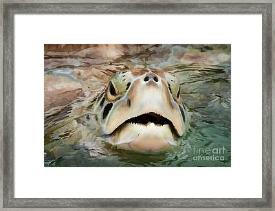 Sea Turtle Poking Head Out Of Water Framed Print by Dan Friend
