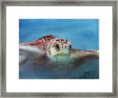 Sea Turtle  Framed Print by Stephanie Sodel