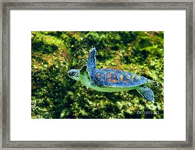 Sea Turtle Swimming In Water Framed Print by Dan Friend