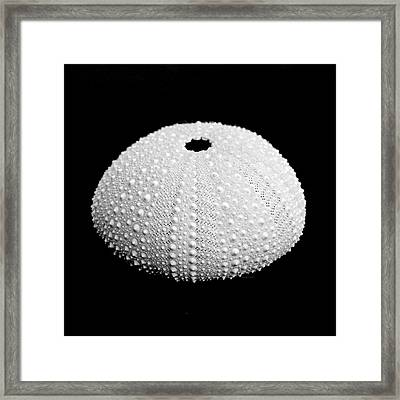 Sea Urchin Black And White Framed Print