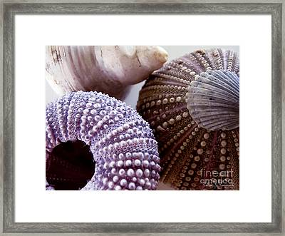 Sea Urchins  Framed Print