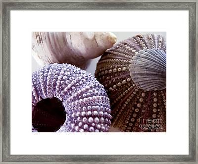 Sea Urchins  Framed Print by Colleen Kammerer