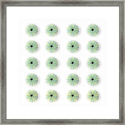 Sea Urchins Framed Print by Jocelyn Friis
