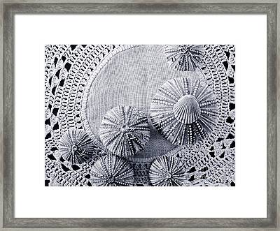 Sea Urchins On Lace Framed Print by Colleen Kammerer