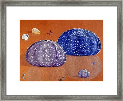 Sea Urchins On The Beach Framed Print by Karyn Robinson