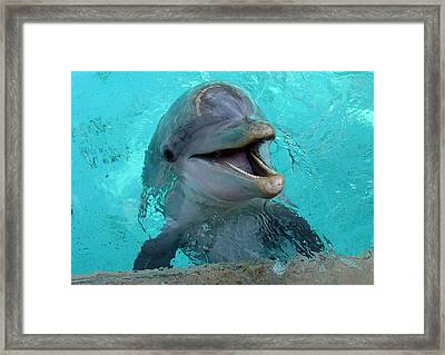 Framed Print featuring the photograph Sea World Dolphin by David Nicholls