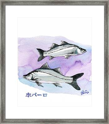 Seabass Framed Print by Yoshiharu Miyakawa