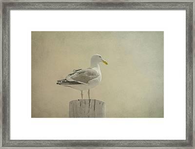 Seabird Framed Print