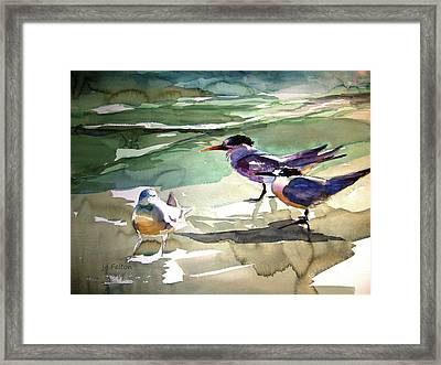 Seabirds  1  Framed Print by Julianne Felton