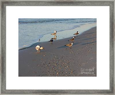 Seabirds Framed Print by Deborah DeLaBarre