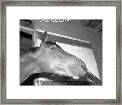 Seabiscuit Triple Crown Winner #10 Framed Print